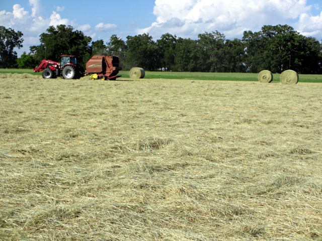 hay progress
